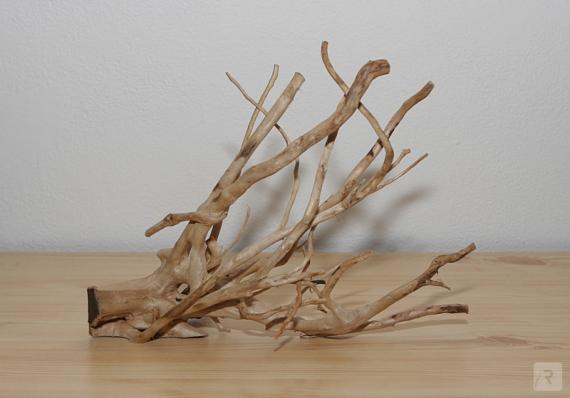 Kořen