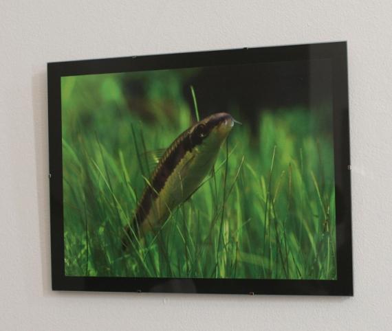 Výstava fotografií Roman Holba