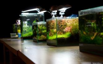 Výstava miniakvárií
