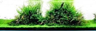 Fascinující svět přírodních akvárií …