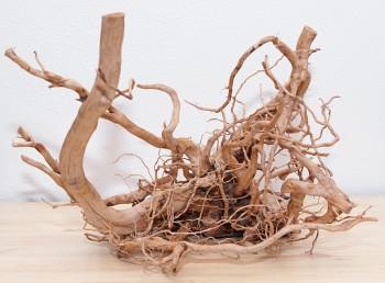 Nový kořen
