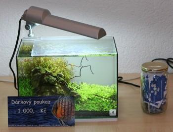 10. brněnská akvaristická burza, 1. místo v soutěži o nejlepší miniakvárium a výstava mých fotografií
